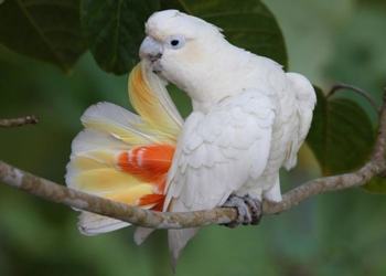 Photo from rainforest-rescue.org