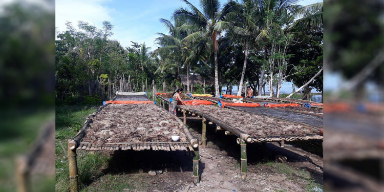 Seaweed farmers in Barangay Babuyan, Puerto Princesa City were among the recipient of the LBP loan as assistance for the seaweed production expansion in Luzviminda, Babuyan and Manalo. Photo courtesy of Joven Delgado, Aquaculturist, City Agriculture Office