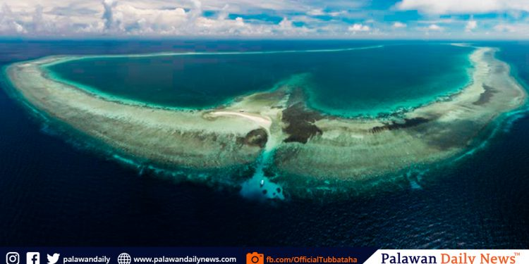 Photo from  Tubbataha Reefs Natural Park and World Heritage Site Facebook page. (https://www.facebook.com/OfficialTubbataha/)