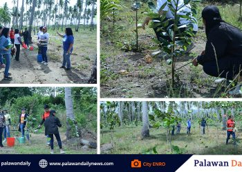 City ENR Officer Atty. Carlo and staff of the City ENRO nurtured beach trees in city's coastal belt in Brgy. Inagawan-Sub, few days after the traditional Love Affair with Nature was cancelled. (Photos from City ENRO).